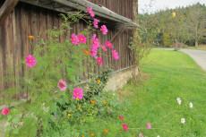 RW 19 Blumen